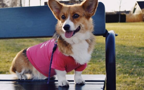 Dog in clothing sitting on a park bench
